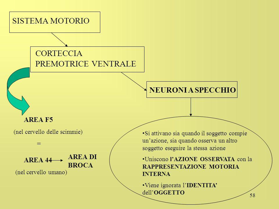 58 SISTEMA MOTORIO CORTECCIA PREMOTRICE VENTRALE NEURONI A SPECCHIO AREA F5 (nel cervello delle scimmie) = AREA 44 (nel cervello umano) AREA DI BROCA