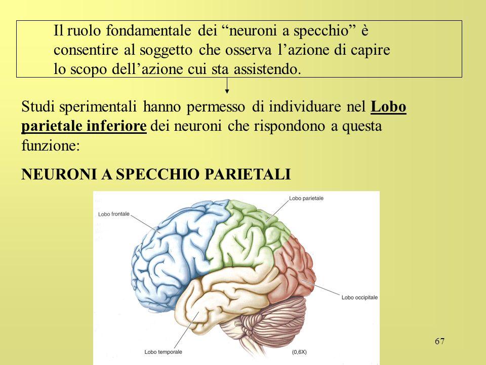 67 Il ruolo fondamentale dei neuroni a specchio è consentire al soggetto che osserva lazione di capire lo scopo dellazione cui sta assistendo. Studi s