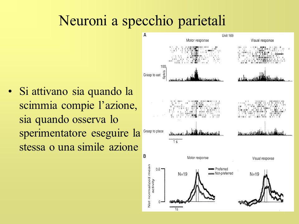 68 Neuroni a specchio parietali Si attivano sia quando la scimmia compie lazione, sia quando osserva lo sperimentatore eseguire la stessa o una simile