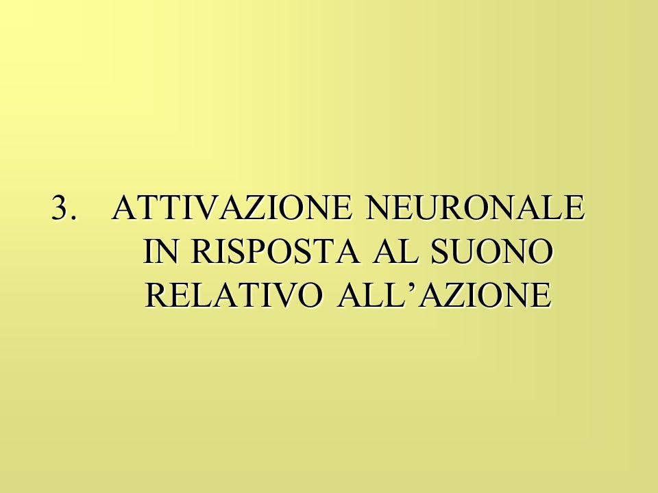 3.ATTIVAZIONE NEURONALE IN RISPOSTA AL SUONO RELATIVO ALLAZIONE
