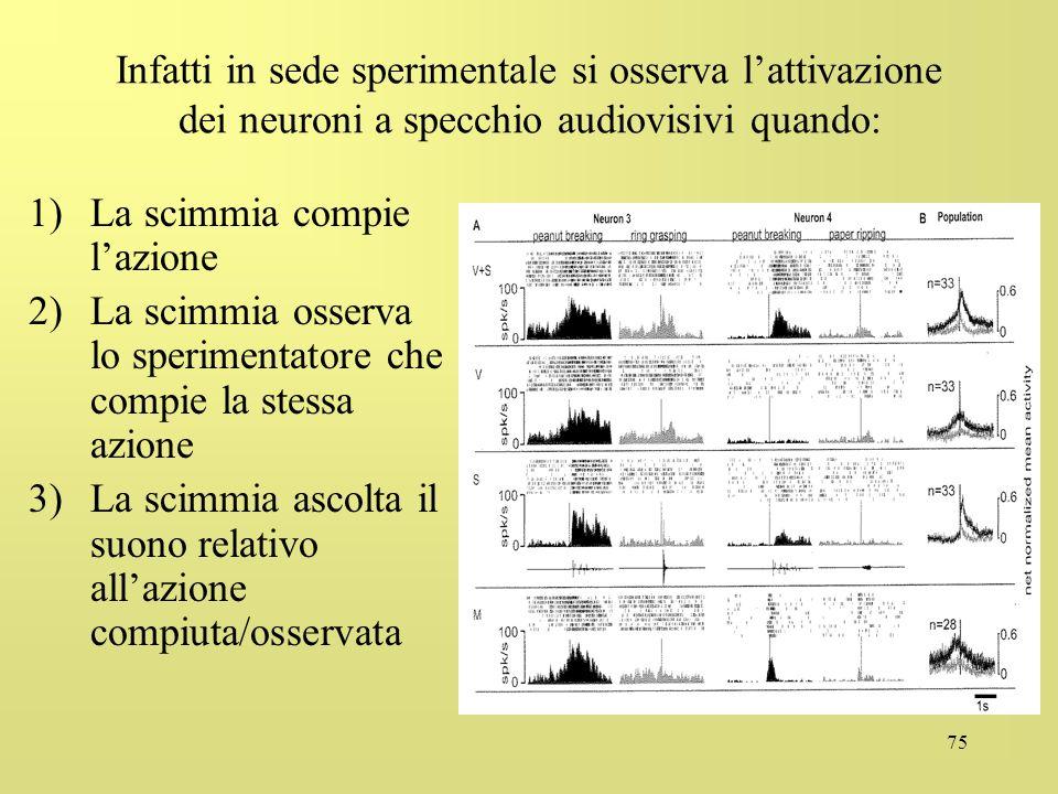 75 Infatti in sede sperimentale si osserva lattivazione dei neuroni a specchio audiovisivi quando: 1)La scimmia compie lazione 2)La scimmia osserva lo