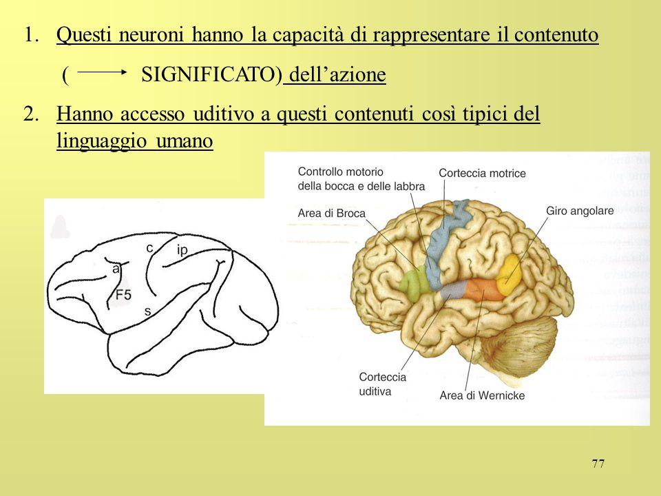 77 1.Questi neuroni hanno la capacità di rappresentare il contenuto ( SIGNIFICATO) dellazione 2.Hanno accesso uditivo a questi contenuti così tipici d