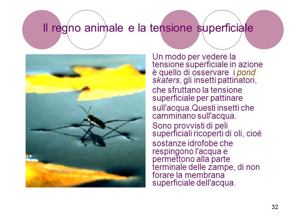 32 Il regno animale e la tensione superficiale Un modo per vedere la tensione superficiale in azione è quello di osservare i pond skaters, gli insetti