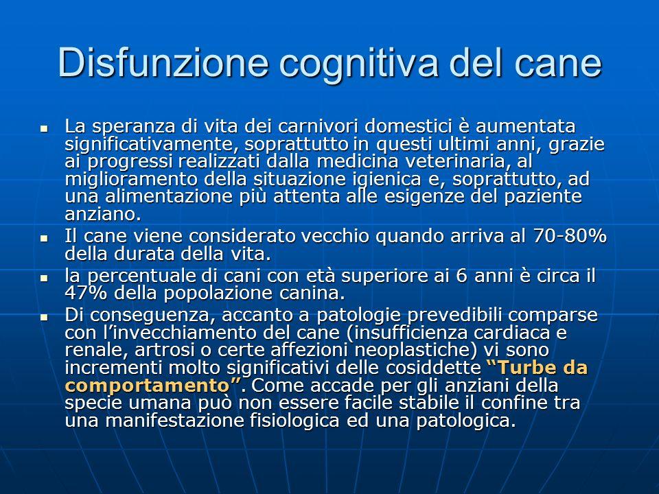 Disfunzione cognitiva del cane Circa il 70% delle forme di demenza progressiva nel cane adulto è causato da questa sindrome molto simile al morbo di alzheimer delluomo.