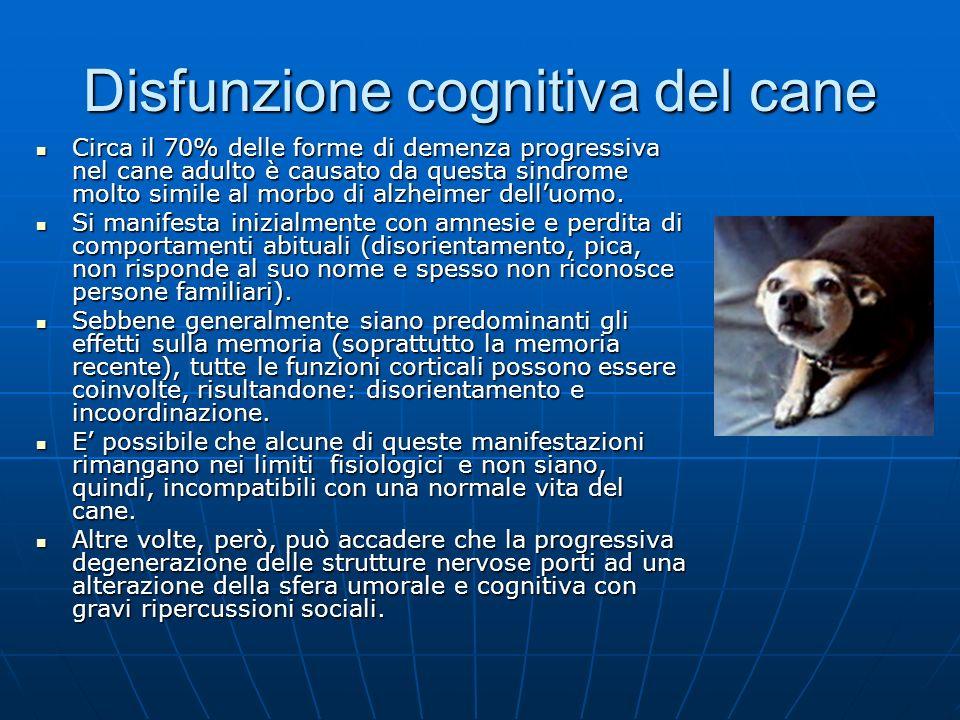 Disfunzione cognitiva del cane Dal punto di vista strettamente anatomico con linvecchiamento si riscontrano spesso in un cane con sindrome da disfunzione cognitiva un certo ispessimento delle meningi, dilatazione dei ventricoli, gliosi, placche diffuse), e neurochimiche (apoptosi neuronale, deposizione di lipofuscina e di proteina beta-amiloide, aumento di stress ossidativo.