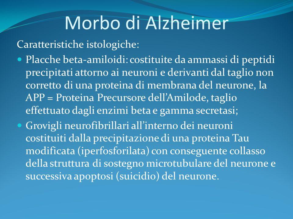 Morbo di Alzheimer Caratteristiche istologiche: Placche beta-amiloidi: costituite da ammassi di peptidi precipitati attorno ai neuroni e derivanti dal