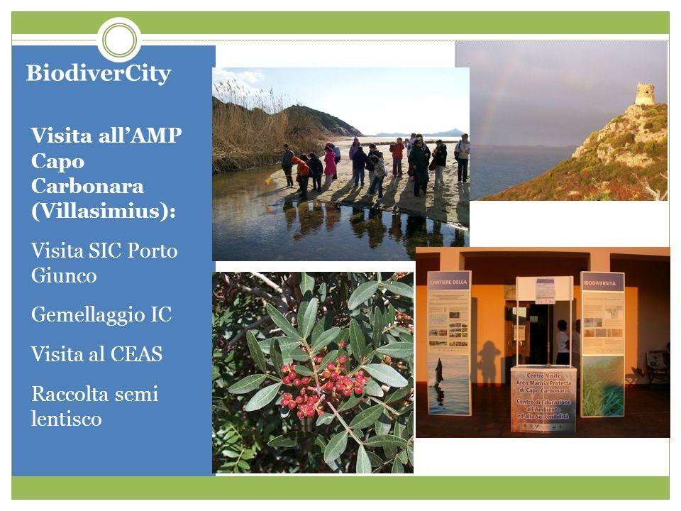 BiodiverCity Visita allAMP Capo Carbonara (Villasimius): Visita SIC Porto Giunco Gemellaggio IC Visita al CEAS Raccolta semi lentisco