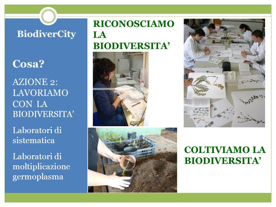 BiodiverCity Cosa? AZIONE 2: LAVORIAMO CON LA BIODIVERSITA Laboratori di sistematica Laboratori di moltiplicazione germoplasma RICONOSCIAMO LA BIODIVE