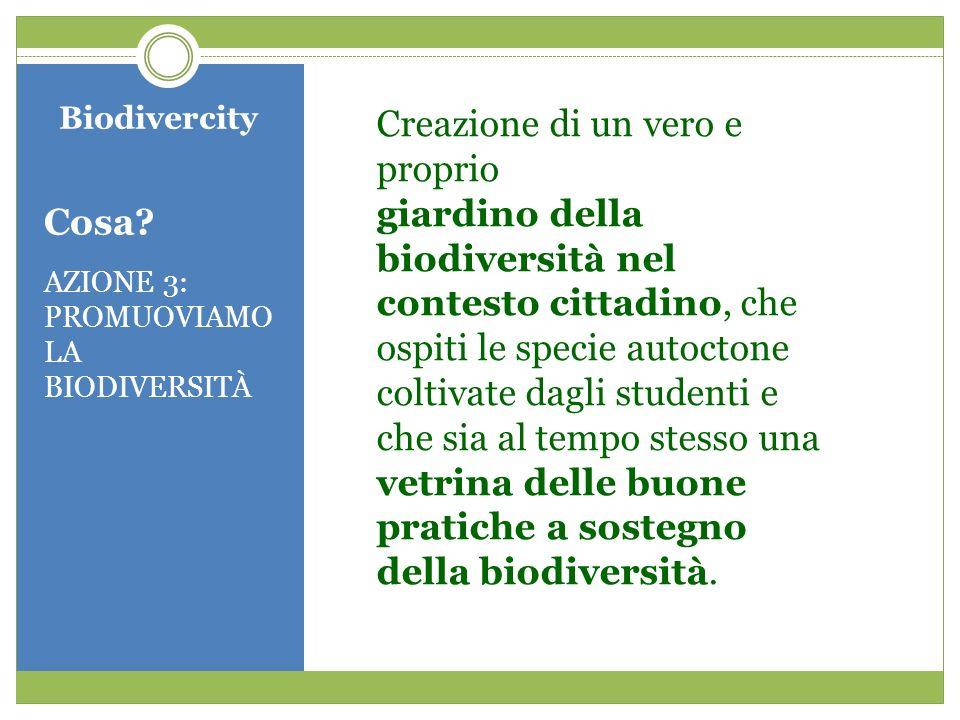 Biodivercity Cosa? AZIONE 3: PROMUOVIAMO LA BIODIVERSITÀ Creazione di un vero e proprio giardino della biodiversità nel contesto cittadino, che ospiti
