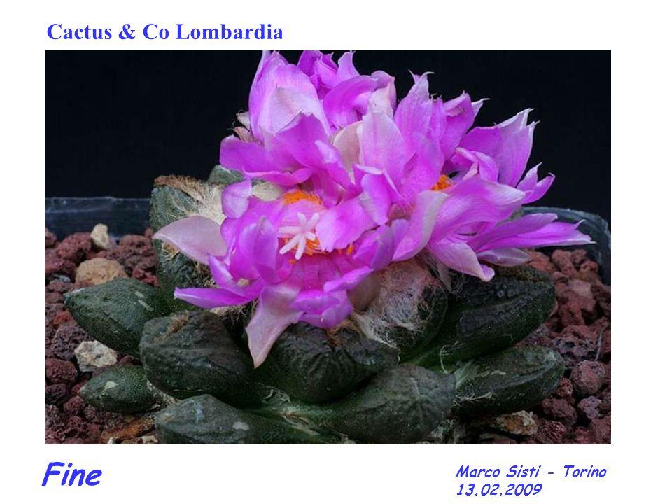 Fine Marco Sisti - Torino 13.02.2009 Cactus & Co Lombardia