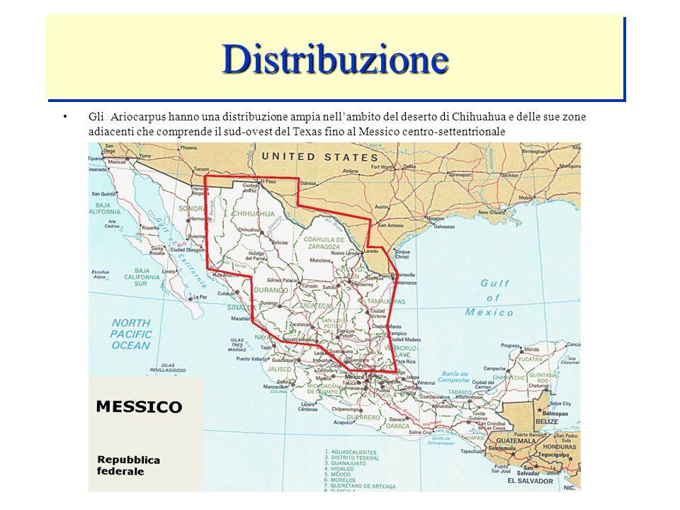 DistribuzioneDistribuzione Gli Ariocarpus hanno una distribuzione ampia nellambito del deserto di Chihuahua e delle sue zone adiacenti che comprende i