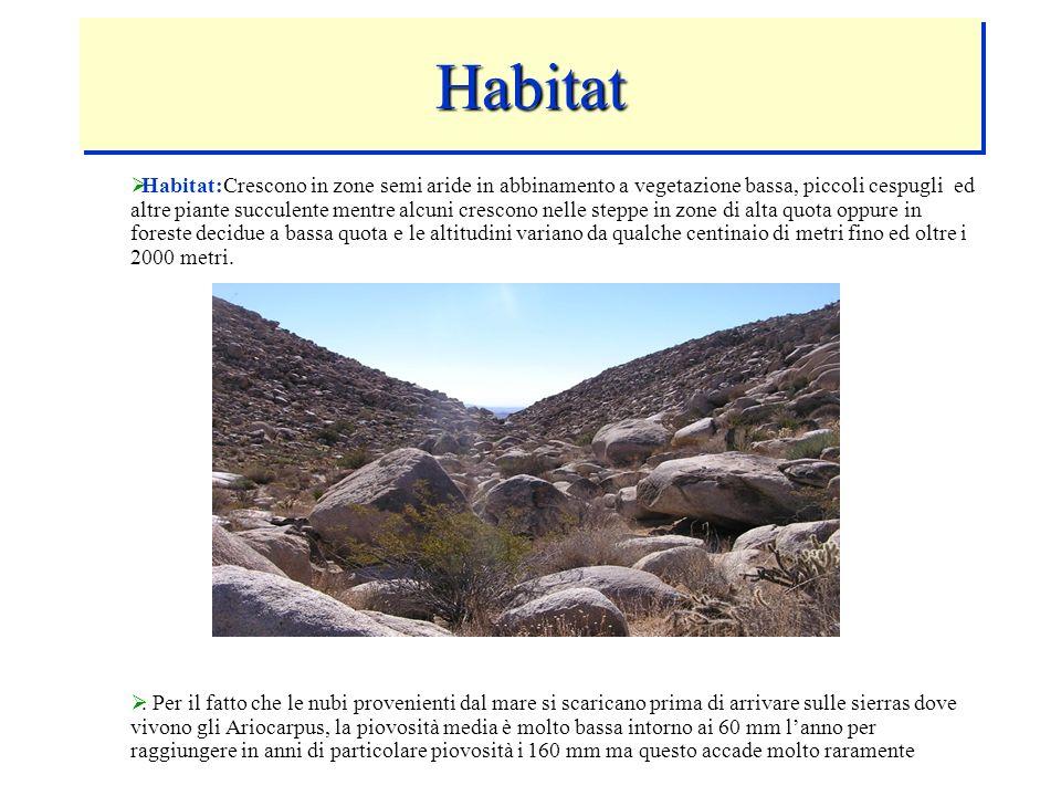 HabitatHabitat Habitat:Crescono in zone semi aride in abbinamento a vegetazione bassa, piccoli cespugli ed altre piante succulente mentre alcuni cresc