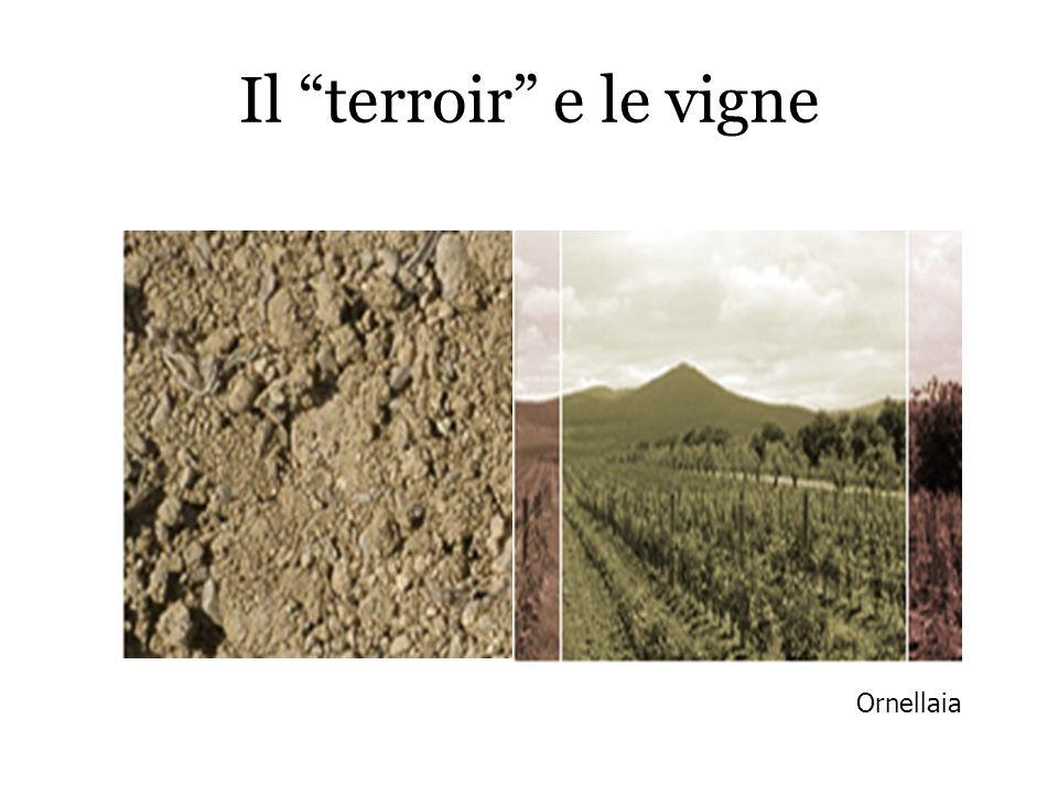 Il terroir e le vigne Ornellaia