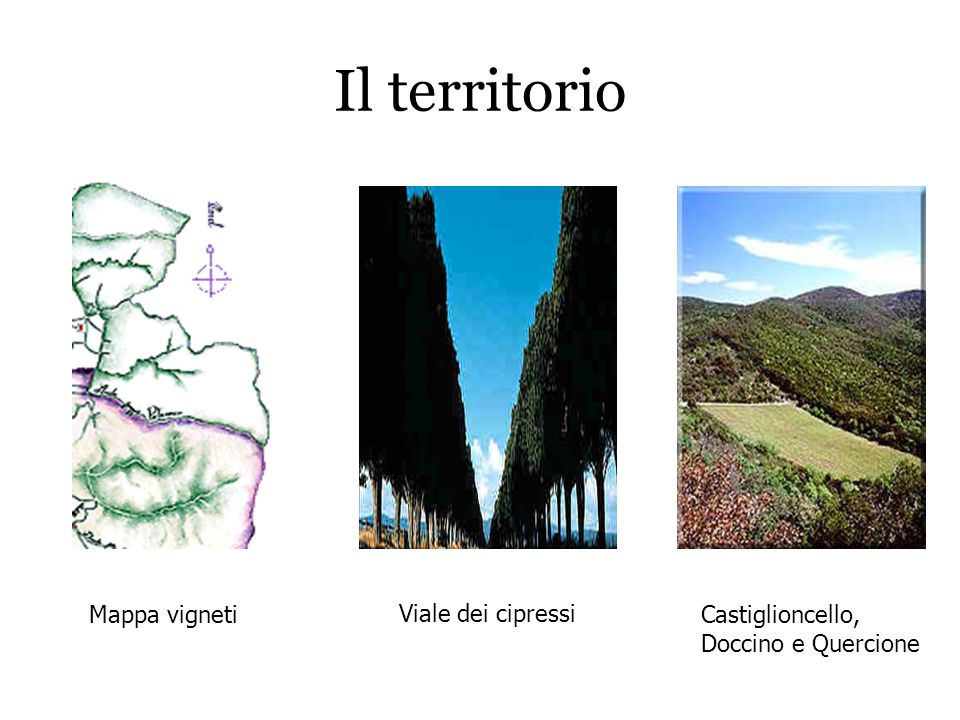 Il territorio Mappa vigneti Viale dei cipressi Castiglioncello, Doccino e Quercione