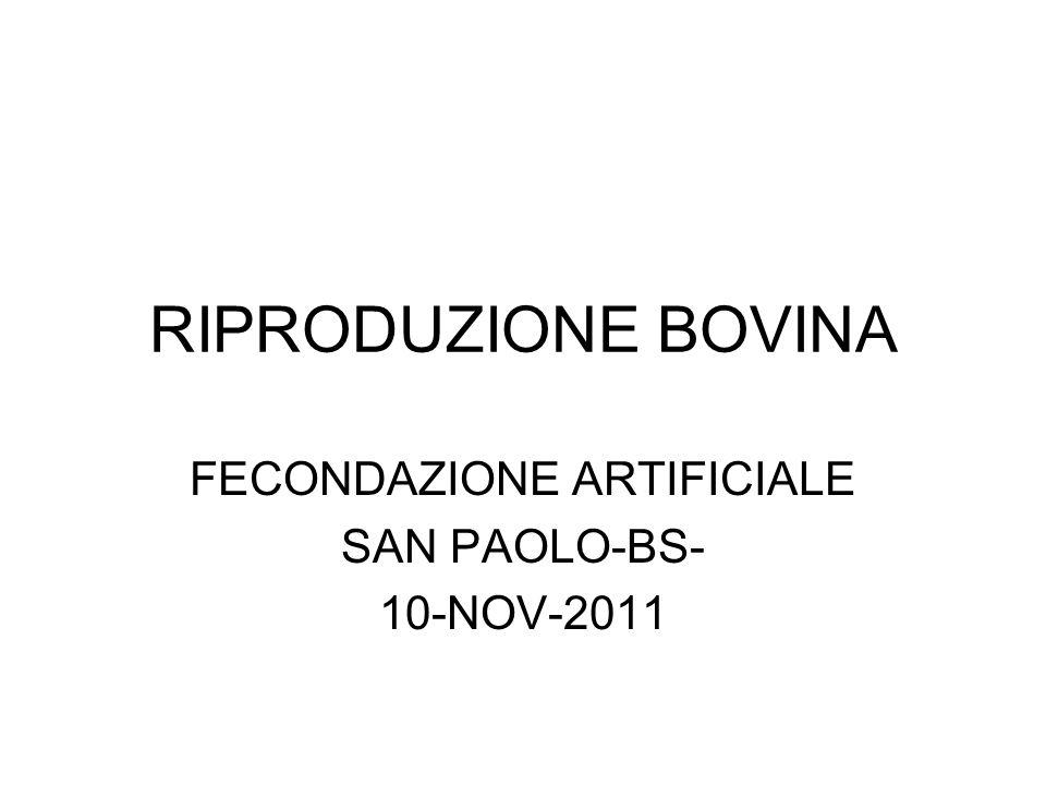 RIPRODUZIONE BOVINA FECONDAZIONE ARTIFICIALE SAN PAOLO-BS- 10-NOV-2011
