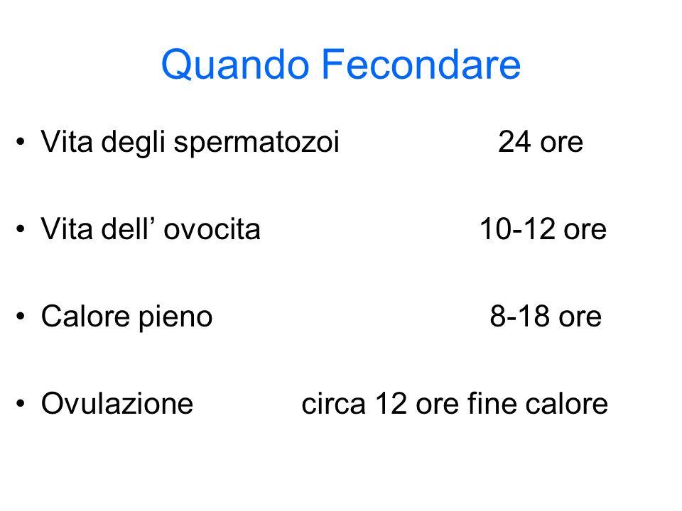 Quando Fecondare Vita degli spermatozoi 24 ore Vita dell ovocita 10-12 ore Calore pieno 8-18 ore Ovulazione circa 12 ore fine calore
