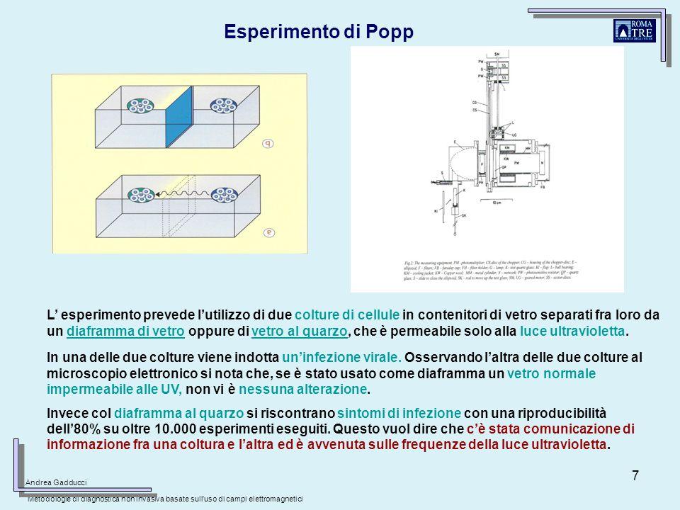 7 L esperimento prevede lutilizzo di due colture di cellule in contenitori di vetro separati fra loro da un diaframma di vetro oppure di vetro al quar