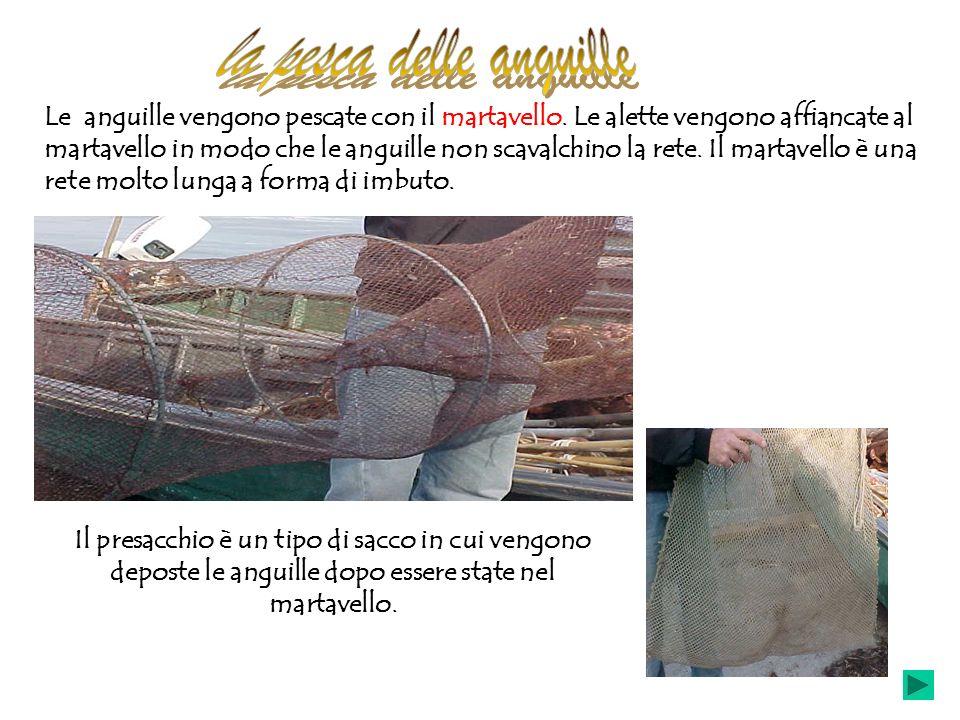 Le anguille vengono pescate con il martavello. Le alette vengono affiancate al martavello in modo che le anguille non scavalchino la rete. Il martavel