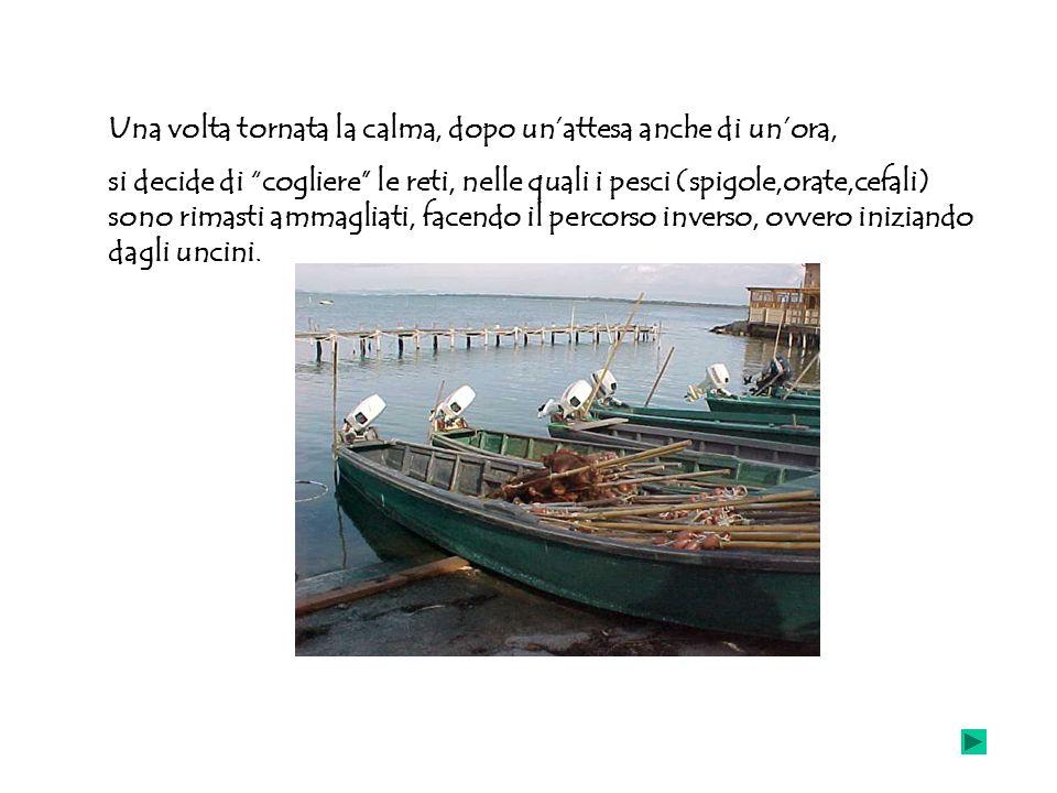 Una volta tornata la calma, dopo unattesa anche di unora, si decide di cogliere le reti, nelle quali i pesci (spigole,orate,cefali) sono rimasti ammag