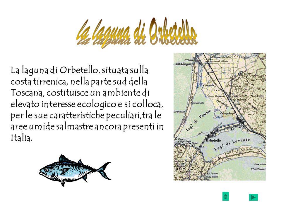La laguna di Orbetello, situata sulla costa tirrenica, nella parte sud della Toscana, costituisce un ambiente di elevato interesse ecologico e si coll