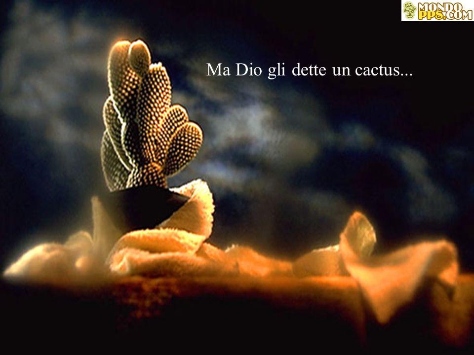 Una volta, un uomo chiese a Dio Un fiore......e una farfalla.