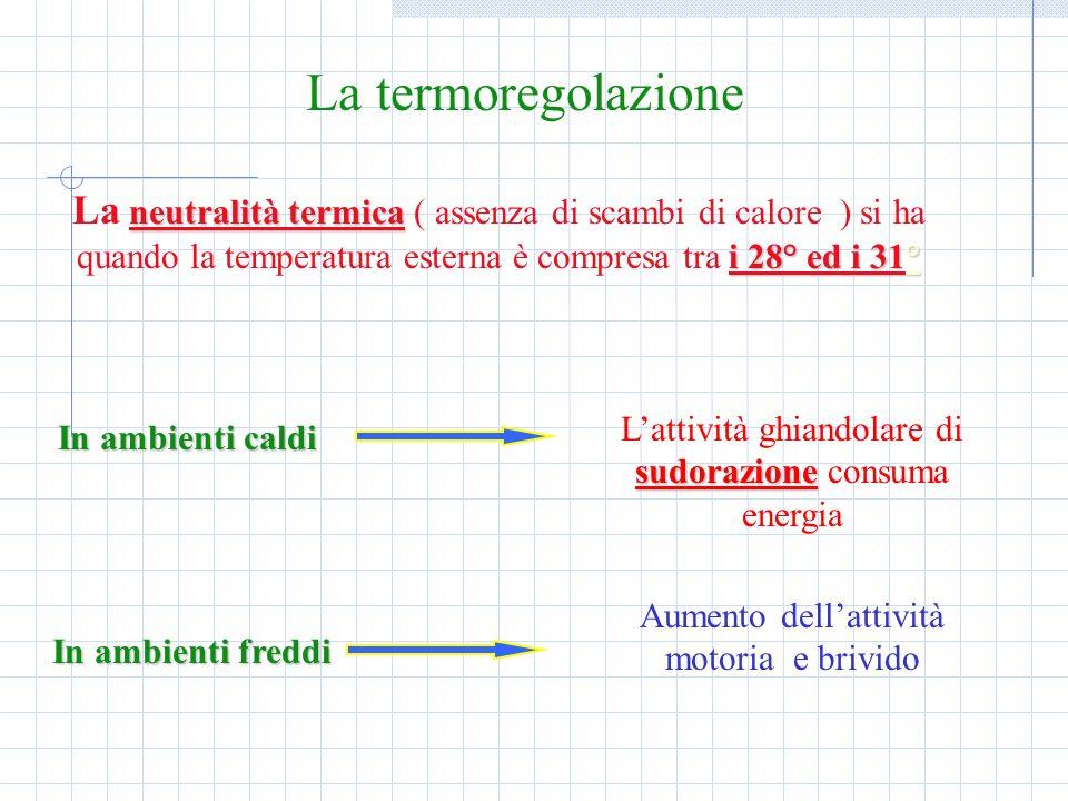 La termoregolazione neutralità termica i 28° ed i 31° La neutralità termica ( assenza di scambi di calore ) si ha quando la temperatura esterna è comp