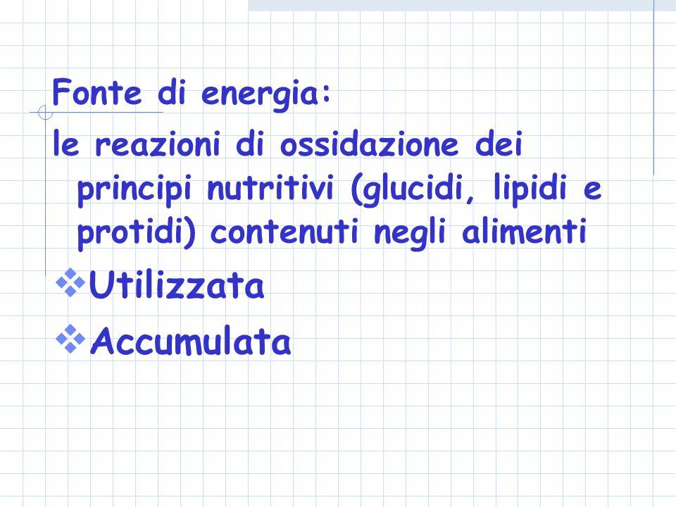 Fonte di energia: le reazioni di ossidazione dei principi nutritivi (glucidi, lipidi e protidi) contenuti negli alimenti Utilizzata Accumulata