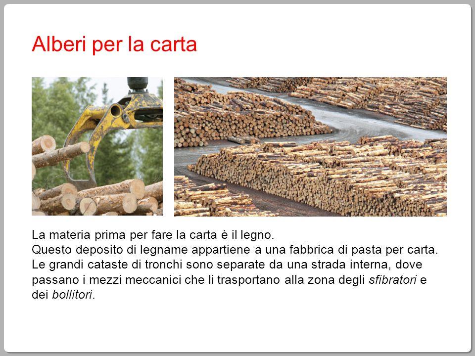 Alberi per la carta La materia prima per fare la carta è il legno. Questo deposito di legname appartiene a una fabbrica di pasta per carta. Le grandi