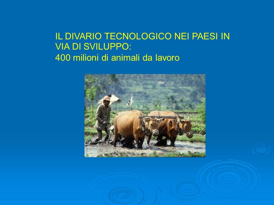 IL DIVARIO TECNOLOGICO NEI PAESI IN VIA DI SVILUPPO: 400 milioni di animali da lavoro
