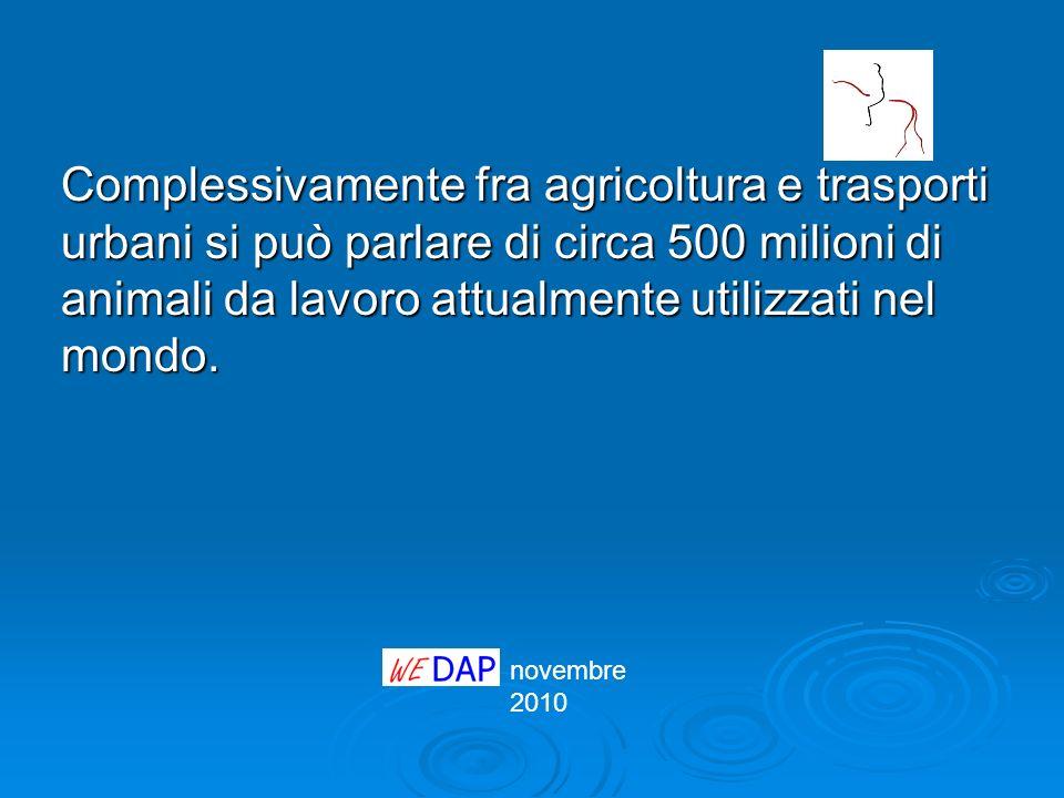 novembre 2010 Complessivamente fra agricoltura e trasporti urbani si può parlare di circa 500 milioni di animali da lavoro attualmente utilizzati nel