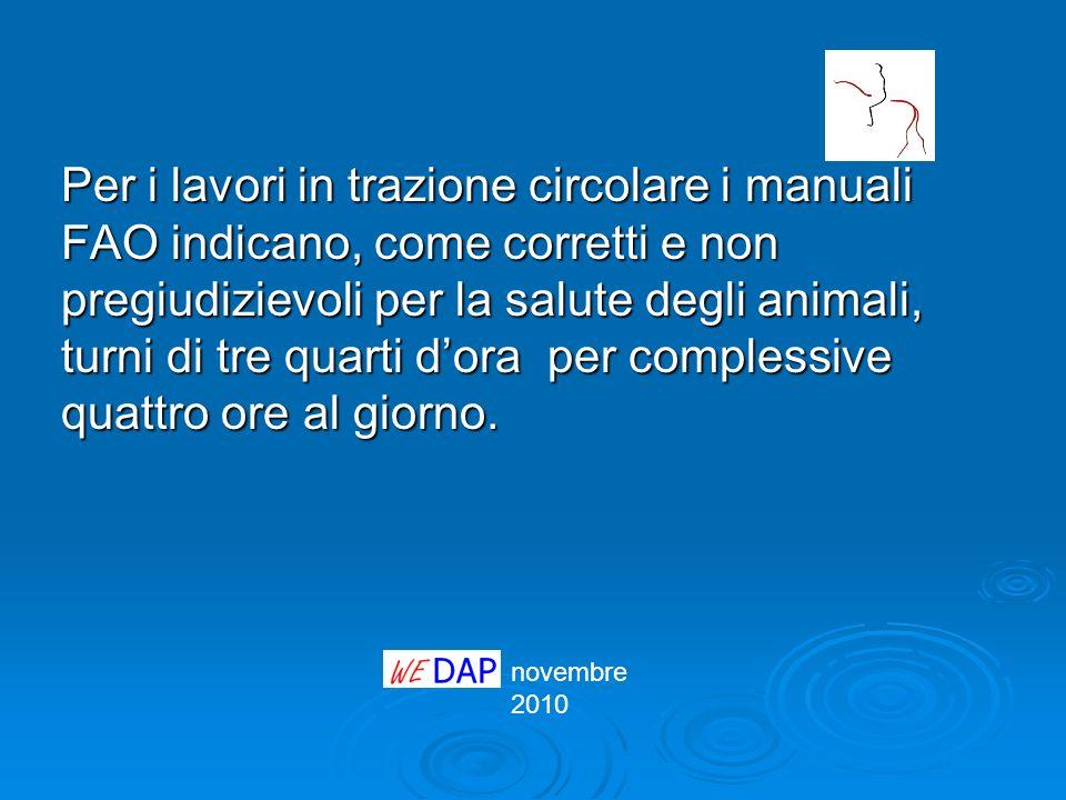 Per i lavori in trazione circolare i manuali FAO indicano, come corretti e non pregiudizievoli per la salute degli animali, turni di tre quarti dora p
