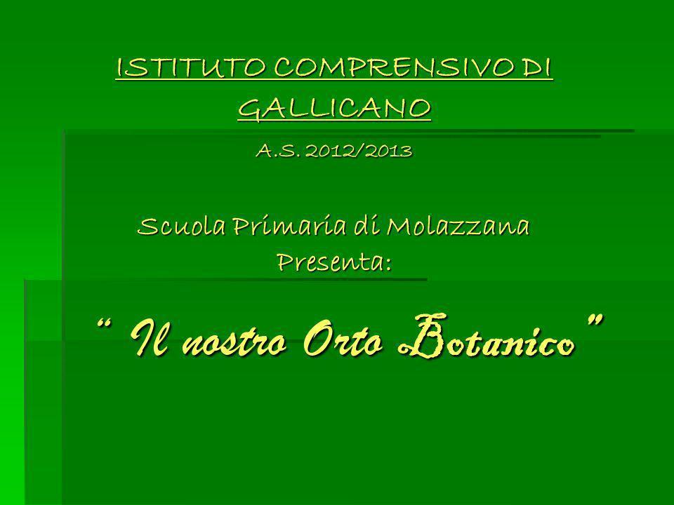 ISTITUTO COMPRENSIVO DI GALLICANO A.S. 2012/2013 Scuola Primaria di Molazzana Presenta: Il nostro Orto Botanico Il nostro Orto Botanico