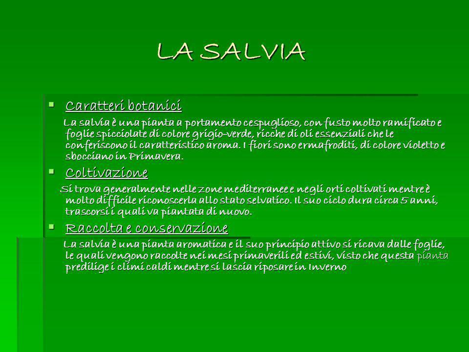 LA SALVIA Caratteri botanici Caratteri botanici La salvia è una pianta a portamento cespuglioso, con fusto molto ramificato e foglie spicciolate di co