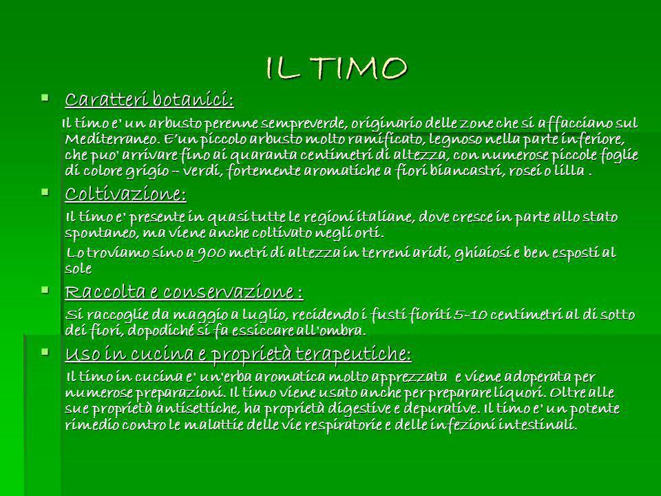 IL TIMO Caratteri botanici: Caratteri botanici: Il timo e' un arbusto perenne sempreverde, originario delle zone che si affacciano sul Mediterraneo. E