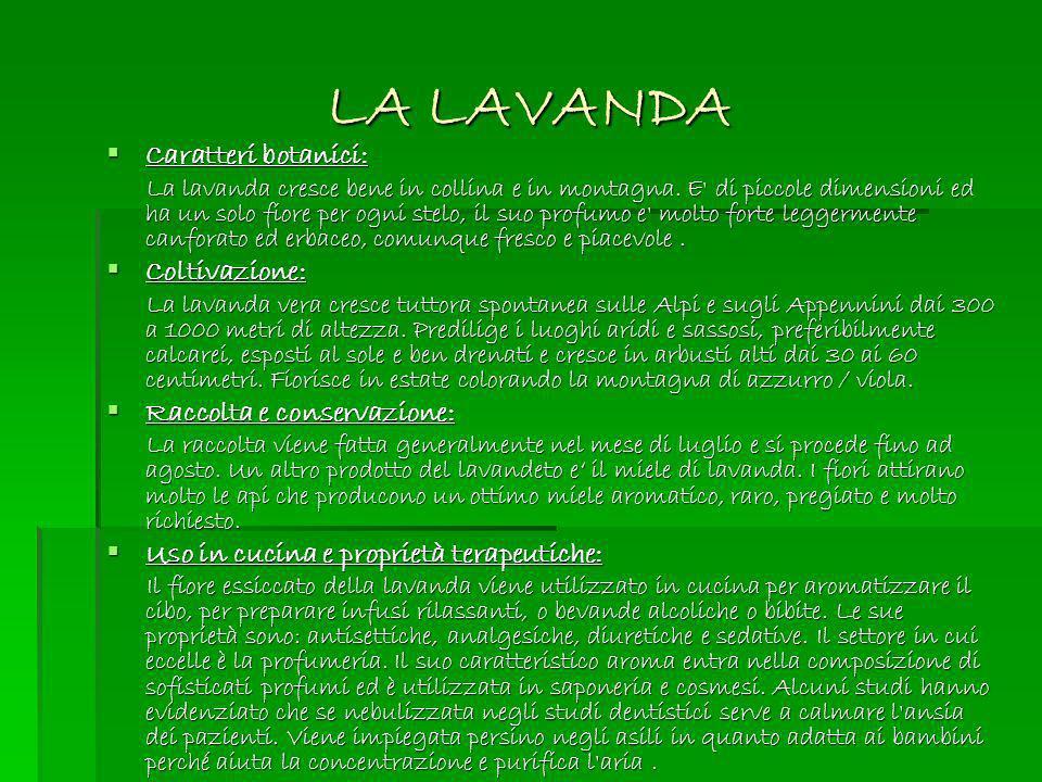 LA LAVANDA Caratteri botanici: Caratteri botanici: La lavanda cresce bene in collina e in montagna. E' di piccole dimensioni ed ha un solo fiore per o