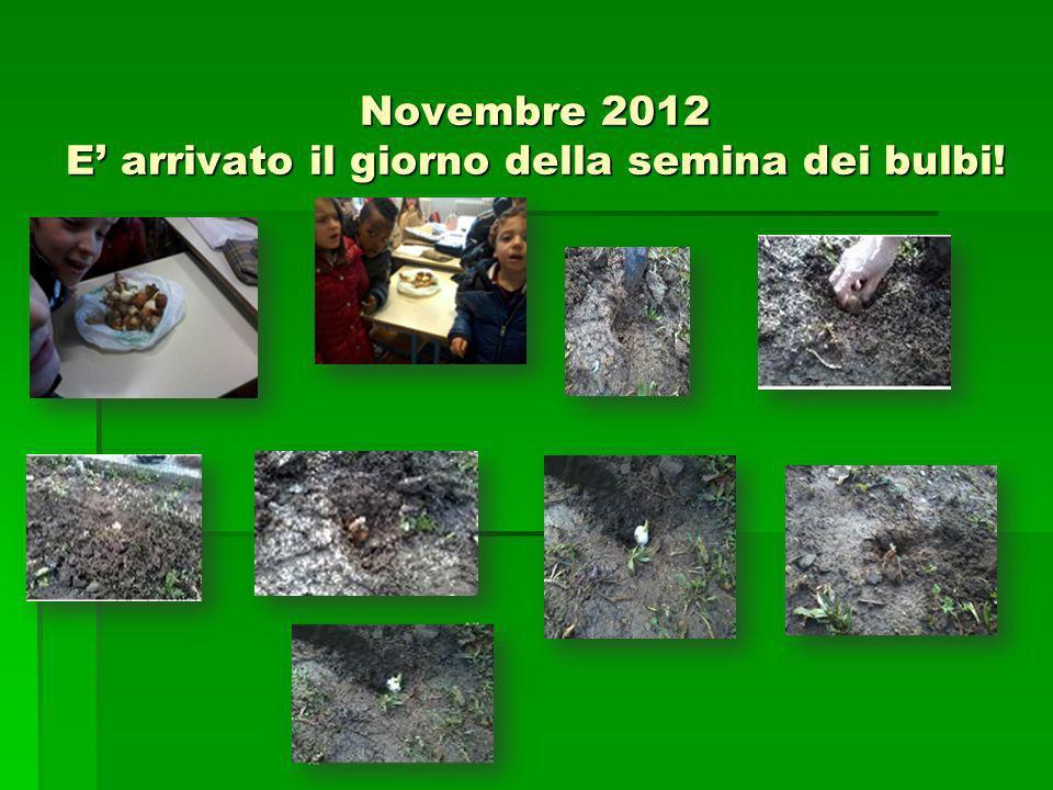 Novembre 2012 E arrivato il giorno della semina dei bulbi!