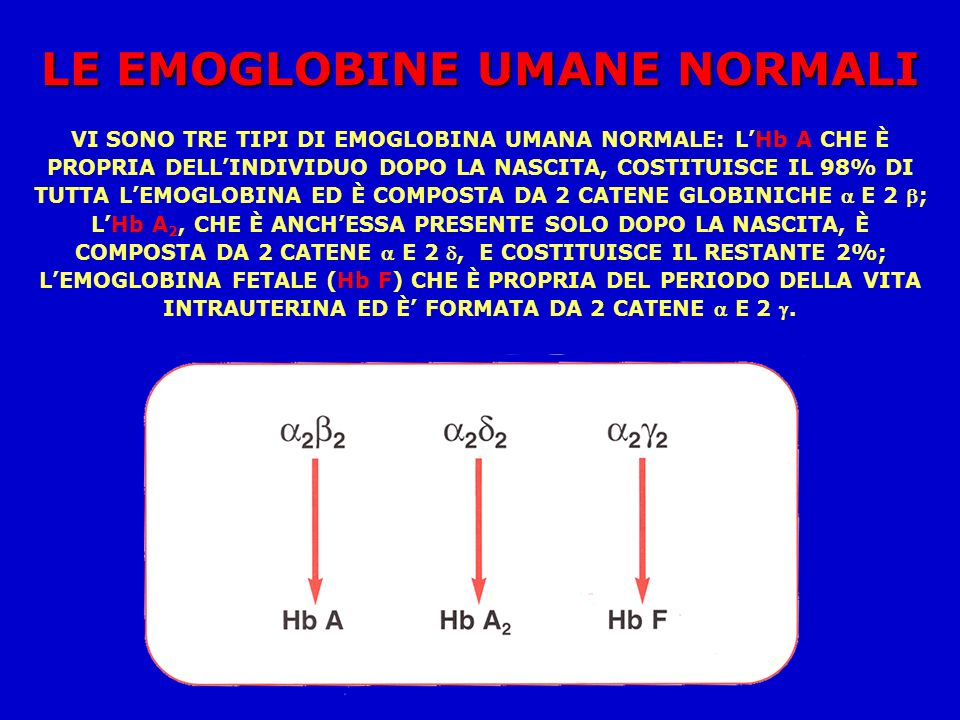 LE EMOGLOBINE UMANE NORMALI VI SONO TRE TIPI DI EMOGLOBINA UMANA NORMALE: LHb A CHE È PROPRIA DELLINDIVIDUO DOPO LA NASCITA, COSTITUISCE IL 98% DI TUTTA LEMOGLOBINA ED È COMPOSTA DA 2 CATENE GLOBINICHE E 2 ; LHb A 2, CHE È ANCHESSA PRESENTE SOLO DOPO LA NASCITA, È COMPOSTA DA 2 CATENE E 2, E COSTITUISCE IL RESTANTE 2%; LEMOGLOBINA FETALE (Hb F) CHE È PROPRIA DEL PERIODO DELLA VITA INTRAUTERINA ED È FORMATA DA 2 CATENE E 2.
