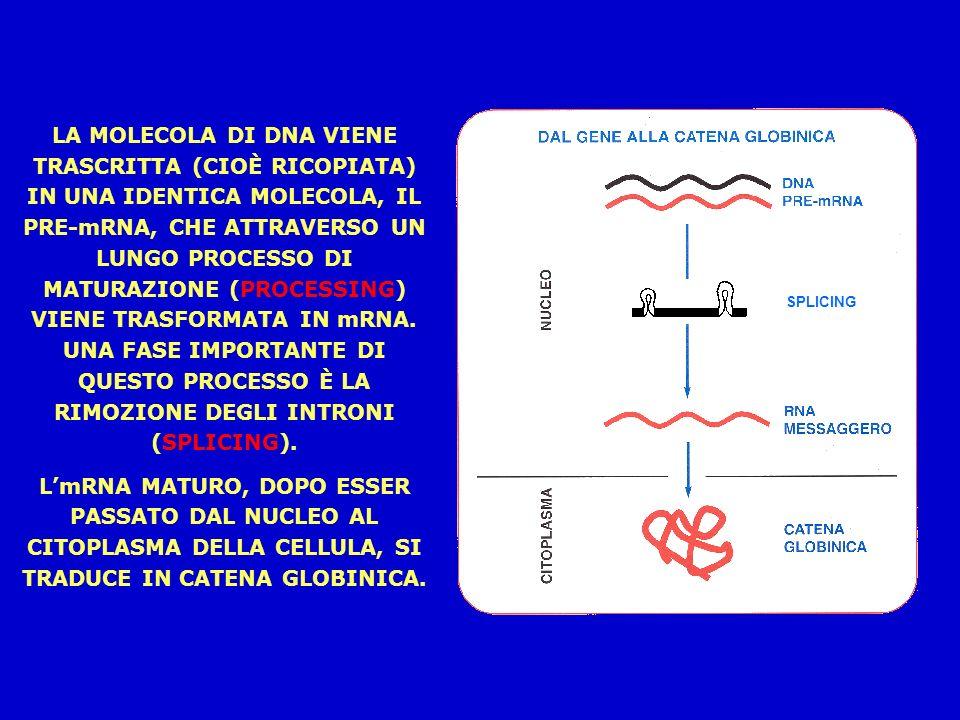 LA MOLECOLA DI DNA VIENE TRASCRITTA (CIOÈ RICOPIATA) IN UNA IDENTICA MOLECOLA, IL PRE-mRNA, CHE ATTRAVERSO UN LUNGO PROCESSO DI MATURAZIONE (PROCESSING) VIENE TRASFORMATA IN mRNA.