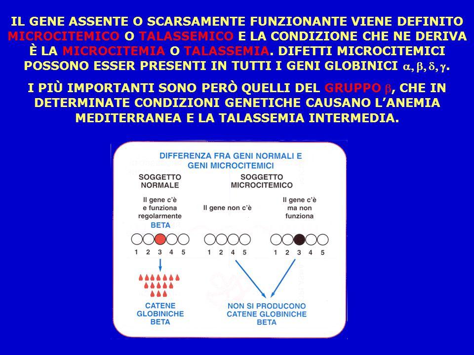 IL GENE ASSENTE O SCARSAMENTE FUNZIONANTE VIENE DEFINITO MICROCITEMICO O TALASSEMICO E LA CONDIZIONE CHE NE DERIVA È LA MICROCITEMIA O TALASSEMIA.