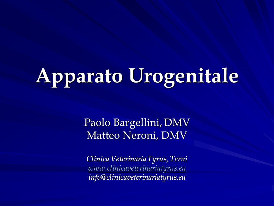 Apparato Urogenitale Paolo Bargellini, DMV Matteo Neroni, DMV Clinica Veterinaria Tyrus, Terni www.clinicaveterinariatyrus.eu info@clinicaveterinariat