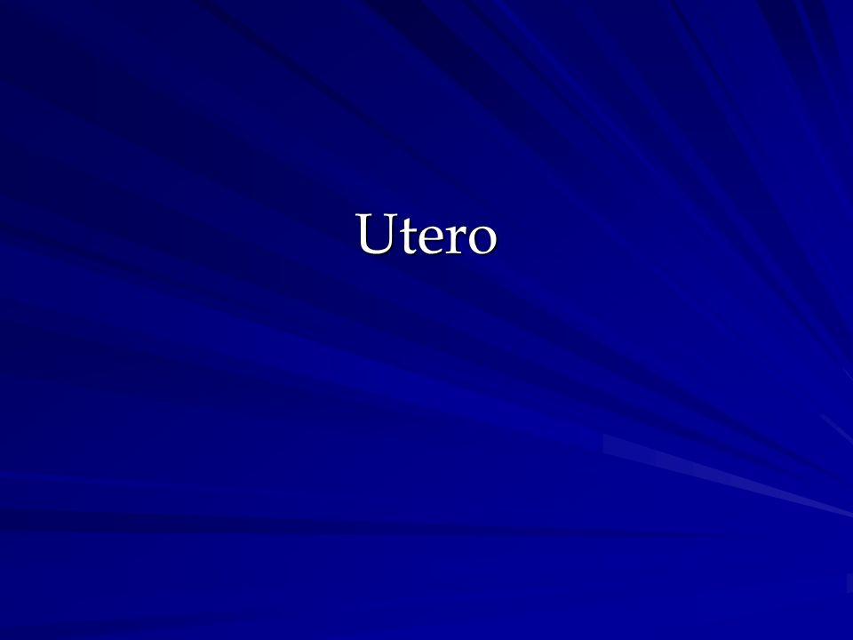 Utero