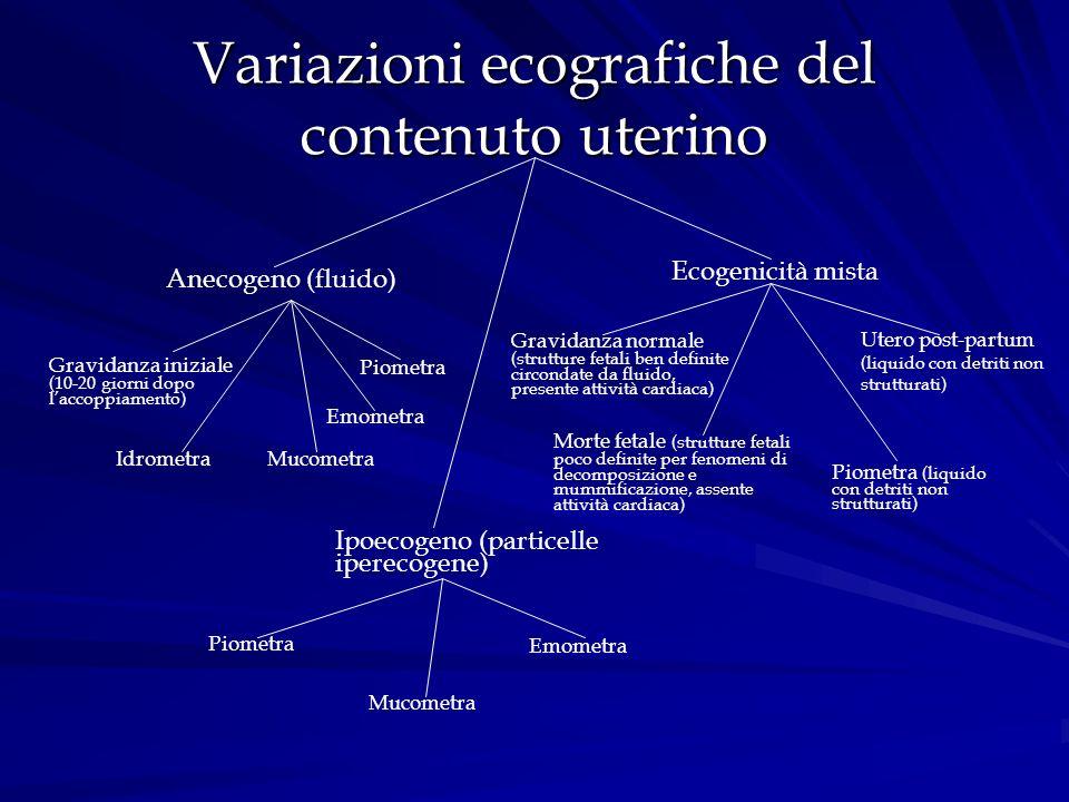 Variazioni ecografiche del contenuto uterino Anecogeno (fluido) Gravidanza iniziale (10-20 giorni dopo laccoppiamento) Piometra Emometra IdrometraMuco