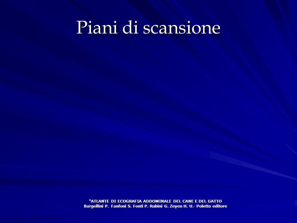 Piani di scansione ATLANTE DI ECOGRAFIA ADDOMINALE DEL CANE E DEL GATTO Bargellini P. Fanfoni S. Fonti P. Rubini G. Zeyen H. U.- Poletto editore
