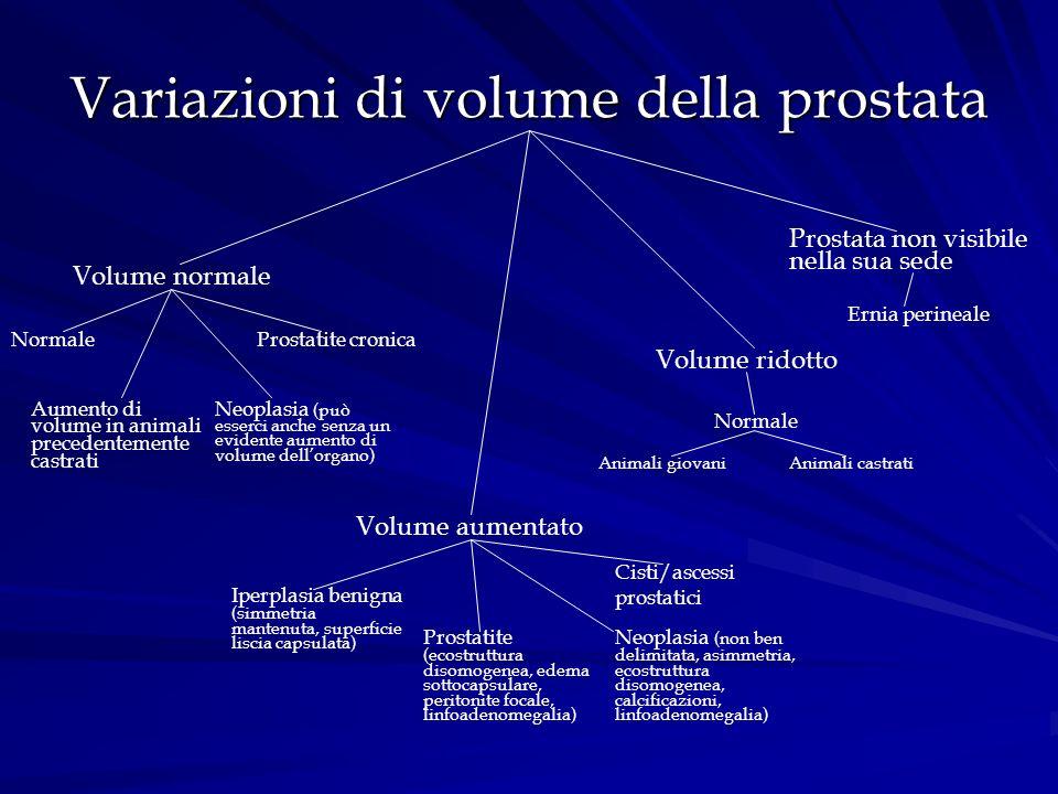Variazioni di volume della prostata Volume normale Normale Aumento di volume in animali precedentemente castrati Neoplasia (può esserci anche senza un
