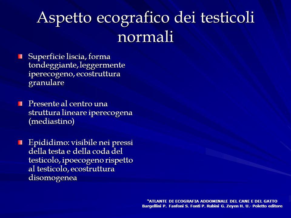 Aspetto ecografico dei testicoli normali Superficie liscia, forma tondeggiante, leggermente iperecogeno, ecostruttura granulare Presente al centro una