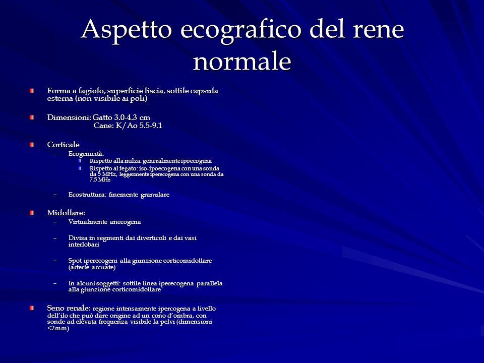 Aspetto ecografico del rene normale Forma a fagiolo, superficie liscia, sottile capsula esterna (non visibile ai poli) Dimensioni: Gatto 3.0-4.3 cm Ca