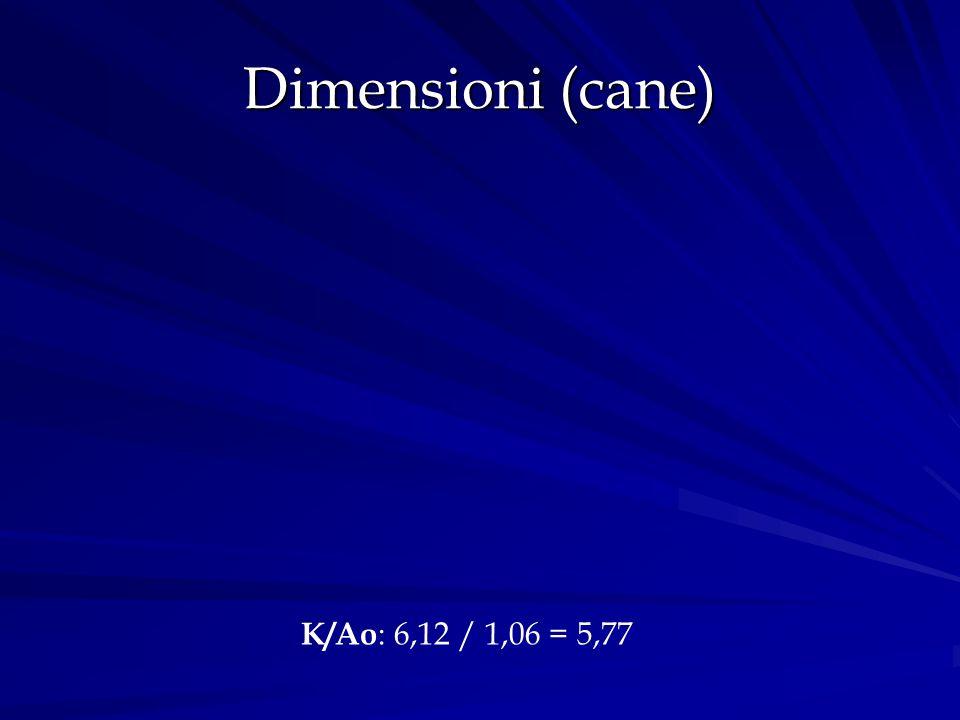 Dimensioni (cane) K/Ao : 6,12 / 1,06 = 5,77