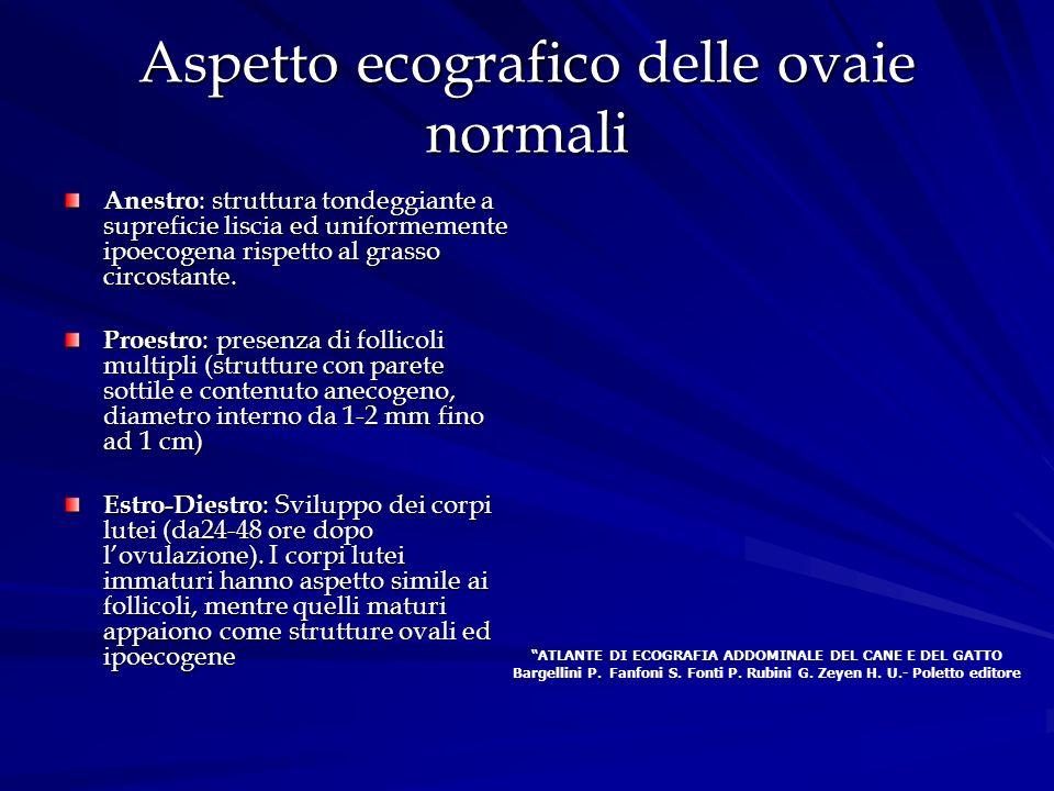 Aspetto ecografico delle ovaie normali Anestro : struttura tondeggiante a supreficie liscia ed uniformemente ipoecogena rispetto al grasso circostante