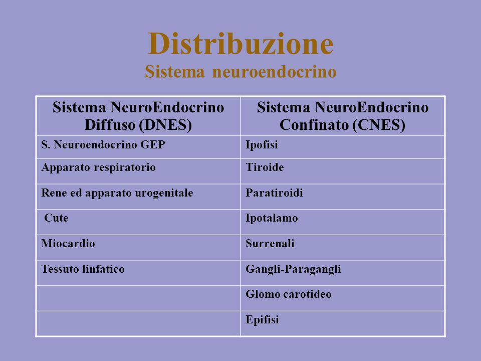 Distribuzione Sistema neuroendocrino Sistema NeuroEndocrino Diffuso (DNES) Sistema NeuroEndocrino Confinato (CNES) S. Neuroendocrino GEPIpofisi Appara