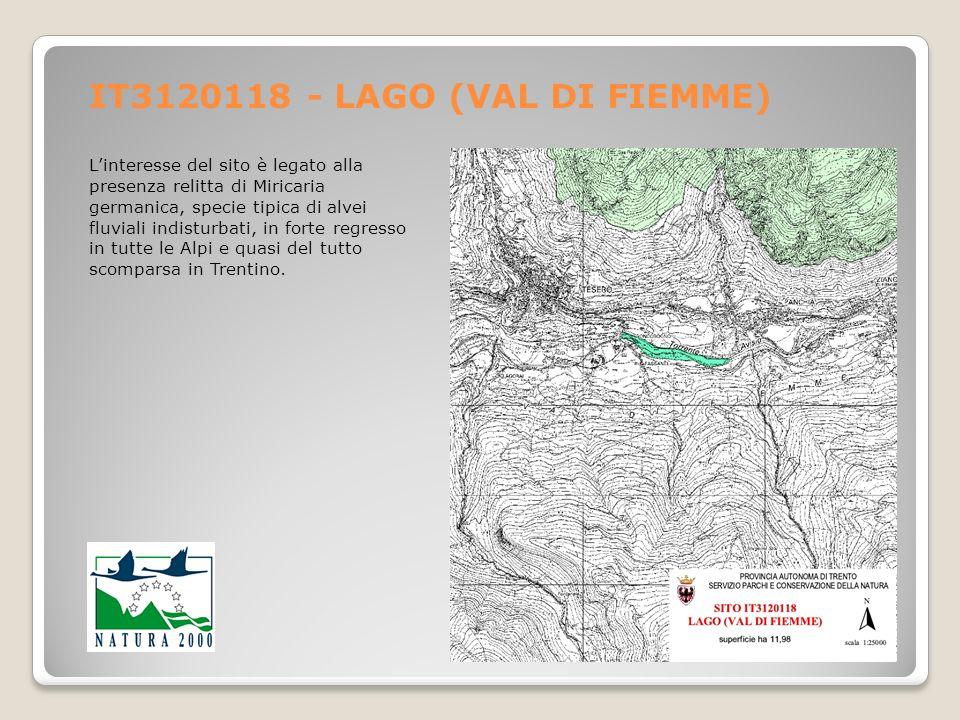 IT3120118 - LAGO (VAL DI FIEMME) Linteresse del sito è legato alla presenza relitta di Miricaria germanica, specie tipica di alvei fluviali indisturba